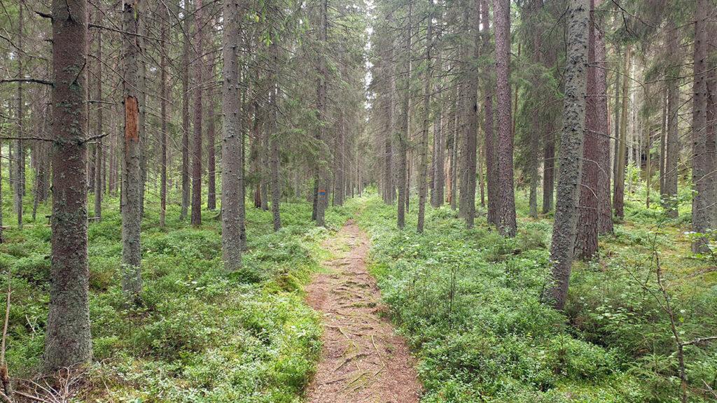 Djäknerundan, Karlsborg Tiveden - skogsbild